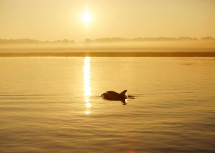 dolphin crests the water at sunrise